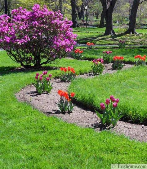 1000 images about spring flowering bulb ideas on