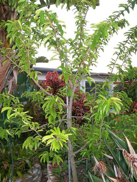 fruit trees for sale fruit trees for sale
