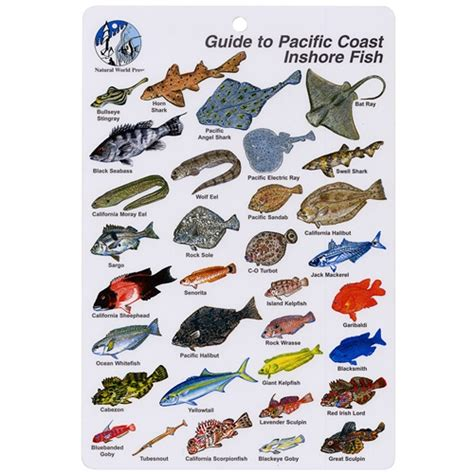 a guide to identifying your home d 233 cor style guide to pacific coast inshore fish