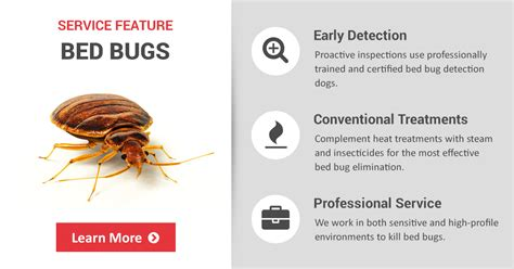 where are bed bugs found how do bed bugs look like bedding sets