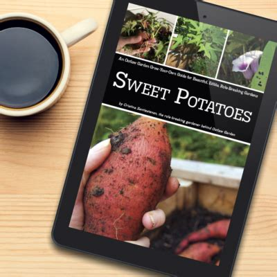 grow your own sweet potatoes outlaw garden sweet potato archives outlaw garden