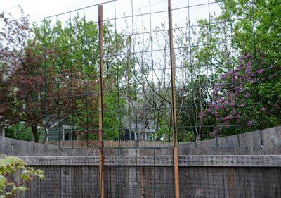 garden grids  tall trellises tall trellis  clematis