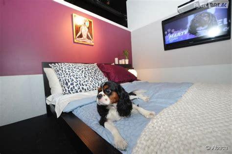 chambre pour chien vienne des chambres d h 244 tel de luxe pour les chiens