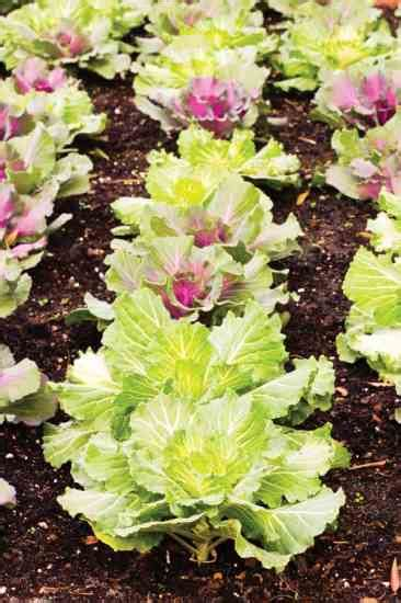 Gardenia And Grit How To Get Healthy Garden Soil Farm And Garden Grit