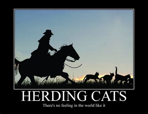 Herding Cats Meme - i m new here advice for first year teachers