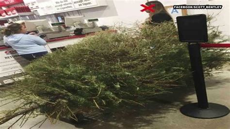 which costcos have live christmas trees irate after costco lets return dead tree in january abc13