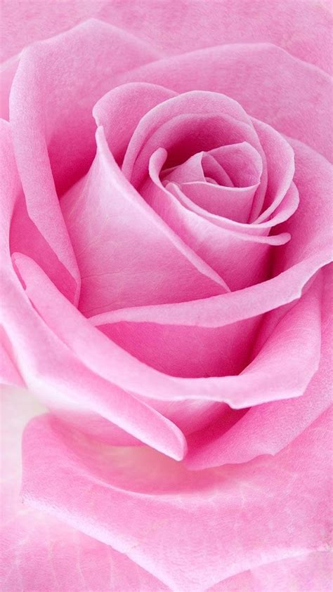 live wallpaper pink rose pink roses live wallpaper android apps on google play