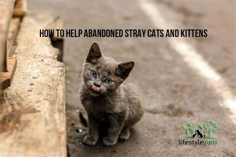 who do i call to up a stray how to help abandoned stray cats and kittens