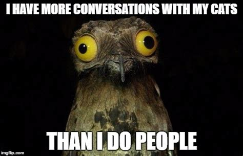 Crazy Bird Meme - as someone with no friends and doesn t go anywhere imgflip