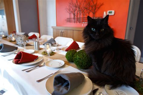 cat dinner how to cook a thanksgiving meal that your cat can enjoy