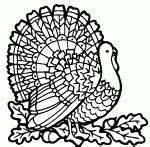turkey mandala coloring pages thanksgiving color pages coloring pages to print