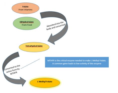 L Methylfolate For Depression Moodsurfing