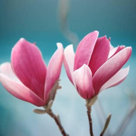 pixwords l immagine con fiore rosa sofiaworld dreamstime