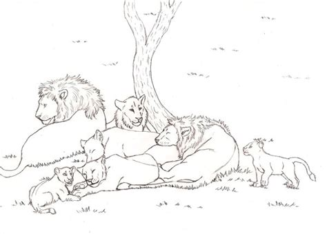 lion pride coloring pages lion pride drawing gallery