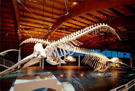 provincia di livorno ufficio caccia il 7 dicembre una notte al museo di storia naturale