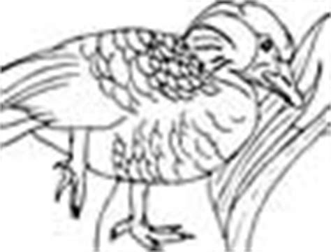 hawaiian birds coloring pages usa states state of hawaii coloring pages