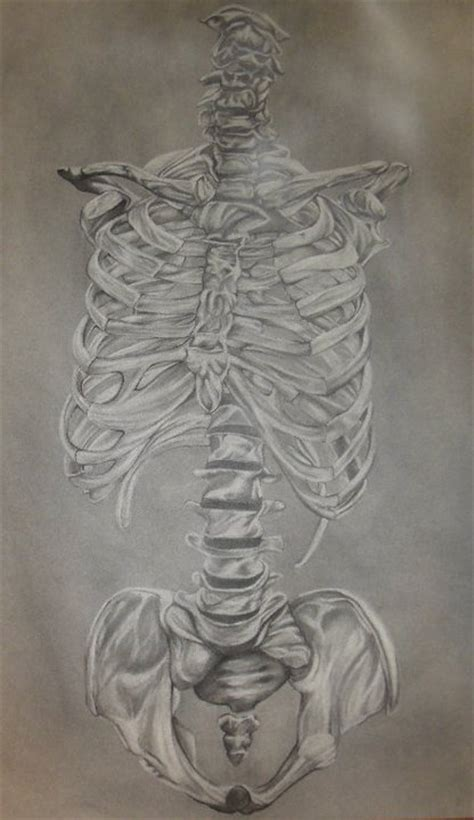 anatomical drawing axial skeleton one by anawar on deviantart