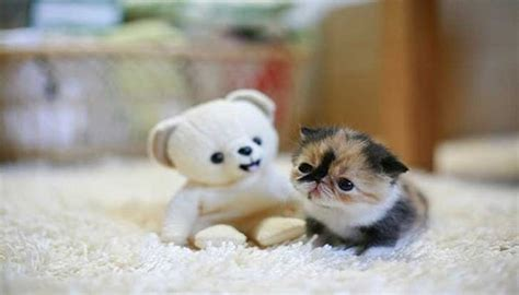 imagenes de gatitos llorando porque lloran los gatos en la noche 8 curiosas razones