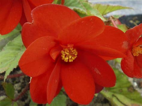 piante con fiori piante con fiori alberi piante con fiori caratteristiche