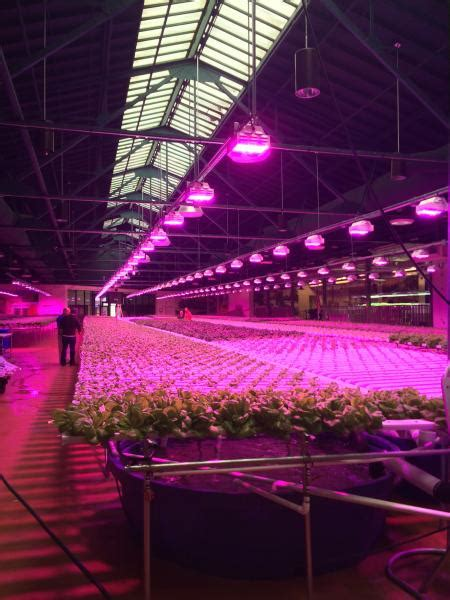 led lighting   effect  plants growers