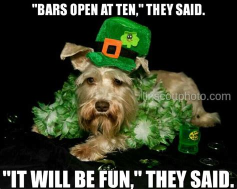 St Pattys Day Meme - pin by britney rebecca on literally laughing out loud
