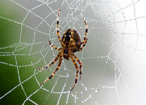 Garden Spider Totem L Abeille Animal Totem L Araign 201 E Animal Totem Et