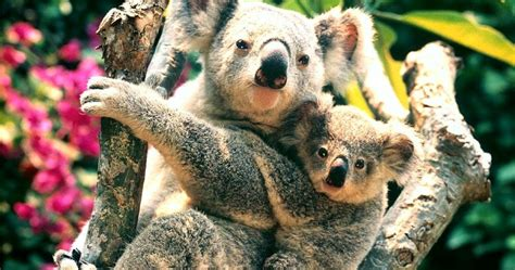 7 Most Animals by Animals Planet Most Beautiful Animal Pictures