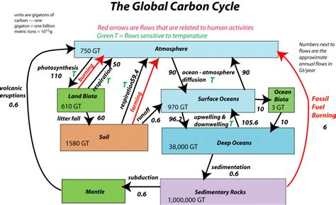 flow diagram of carbon cycle 11 6 applications of acid base equilibria chemwiki