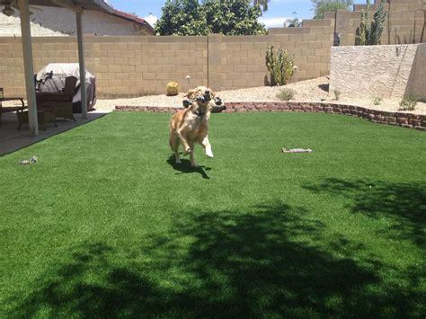 backyard pets 17 best images about easyturf backyard pet design on