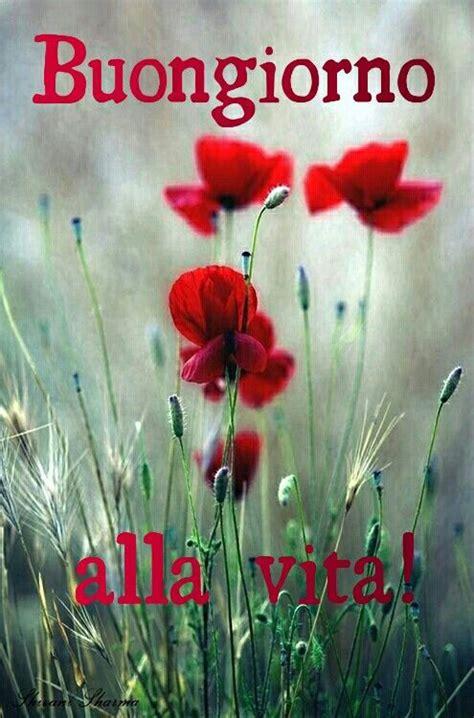 di giorno fiori buongiorno alla vita buongiorno con i fiori