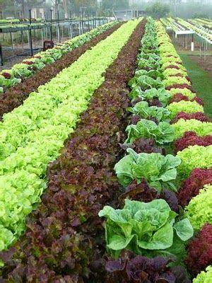 today  social sciences hydroponics  aeroponics