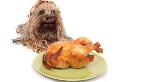 thanksgiving puppy 7 thanksgiving food and treat recipes dogtime