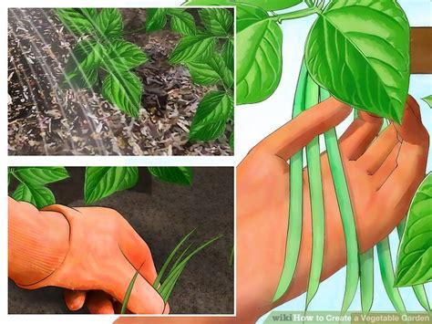 how to create a vegetable garden 11 steps with pictures