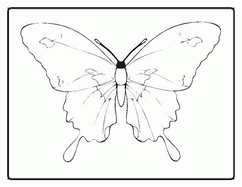 Life Cycle Of A Butterfly Coloring Page Az Coloring Pages Butterfly Cycle Coloring Page