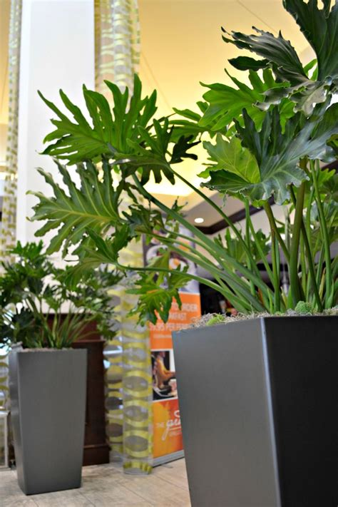 Lobby Planters by 17 Best Images About Tropicals For Home And Office