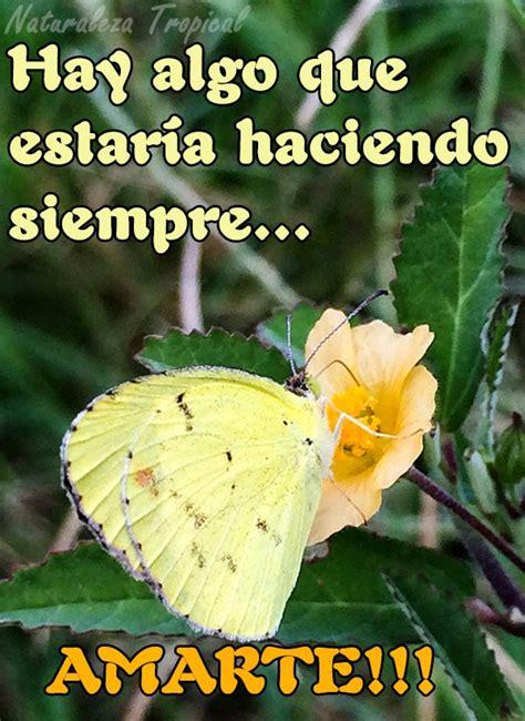 frases con mariposas imagenes im 225 genes de mariposas im 225 genes chidas
