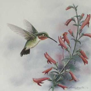 thru my eyes do hummingbirds really hum