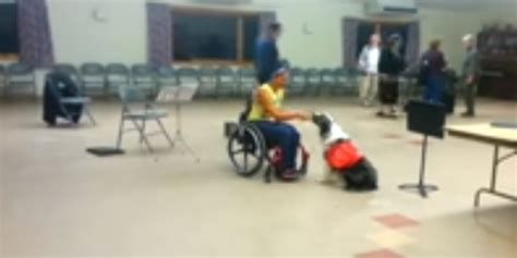 what do service dogs do what does a service do doggyzoo comdoggyzoo