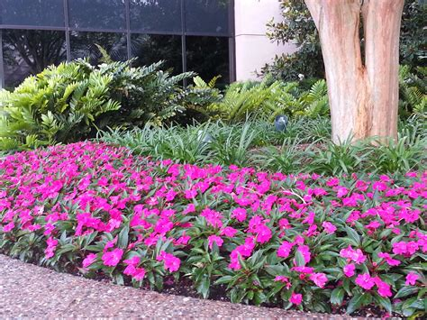 Annuals For Planters by No Worries Property Maintenance The Difference Between