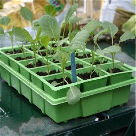 seed tray growing  propagation lids  propagation