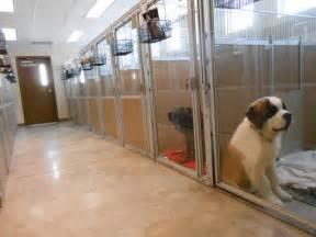 Pet Boarding Grizzly Peak Animal Hospital Lodge Montana 187 Pet Boarding