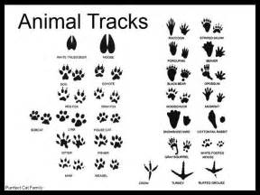 Animal Tracks Track And Animals On Pinterest sketch template