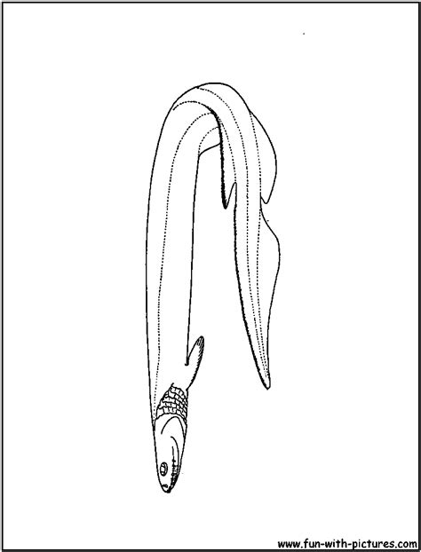 frilled shark coloring page frilled shark pages coloring pages