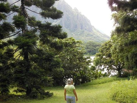 Hoomaluhia Botanical Garden Fishing Koi Fish In The Pond Picture Of Hoomaluhia Botanical Gardens Kaneohe Tripadvisor