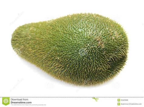 tayota in english chayote squash royalty free stock images image 33423999
