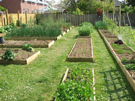 vegetable garden layout tips  guides interior