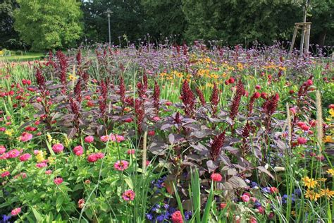 Britzer Garten Mohriner Allee Berlin by Saisonbepflanzungen In Der Mohriner Allee B 252 Ro Christian