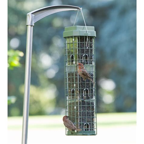 amazon com perky pet 104 evenseed squirrel dilemma wild