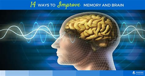 brain 2 manuscripts photographic memory memory books 14 ways to improve memory and brain health marine
