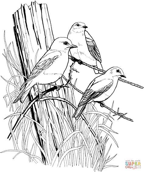 coloring pages blue bird eastern blue birds on barbed wire coloring online super